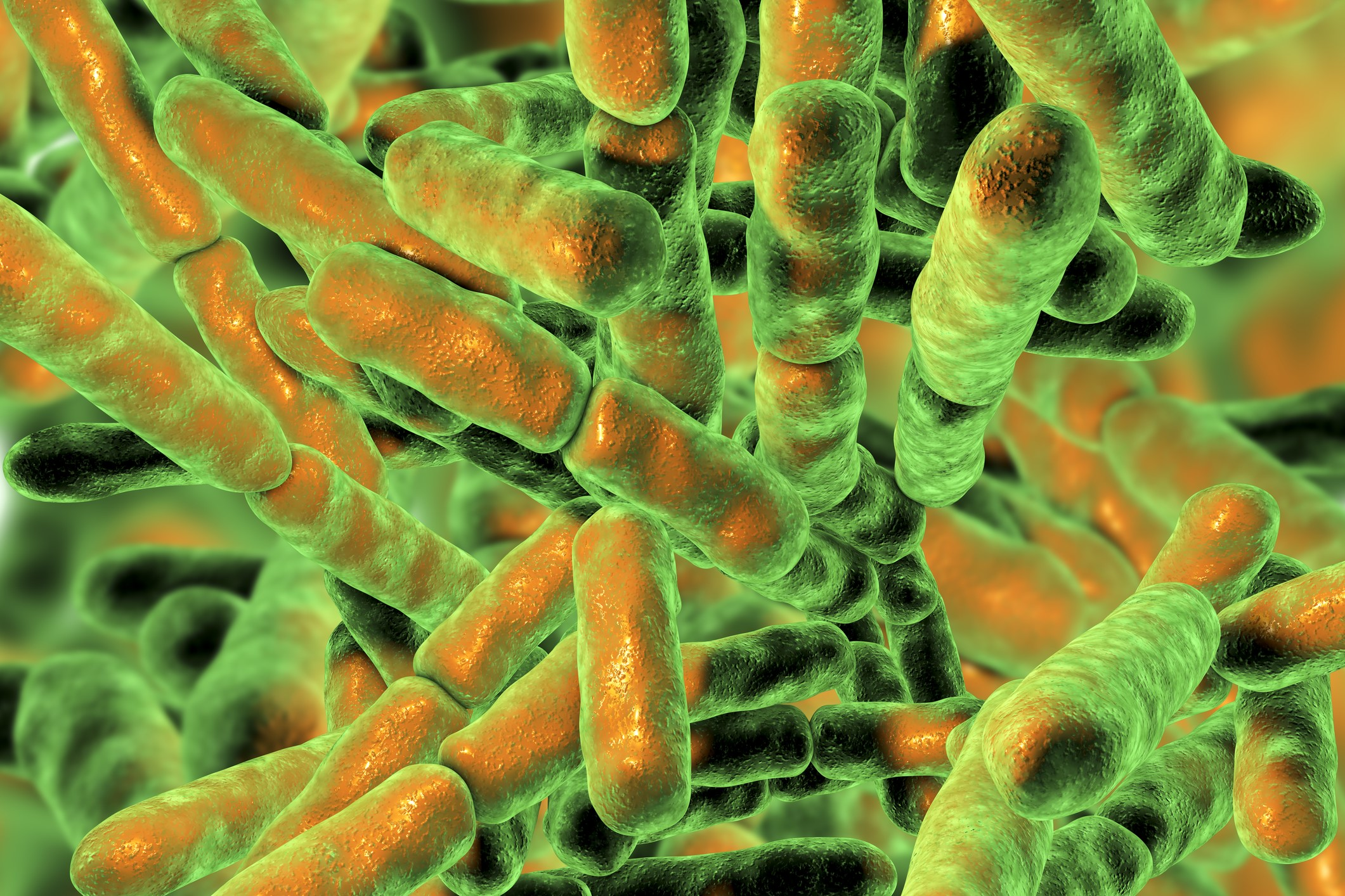 bacteroidetes bacteria weight loss